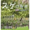 【釧路市立博物館】企画展「スゲの世界〜初夏のスゲまつり」