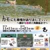 企画展「カモにも事情がありまして…〜餌から恋の三角関係まで〜」【釧路市立博物館】