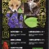 アイヌ語で自然かんさつ展【浦幌町立博物館】