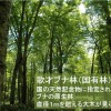 北限のブナ林の150年:伐採の50年と再生の100年【コラムリレー第7回】