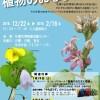 札幌の自然史でたどる植物のおなまえ展【札幌市博物館活動センター】