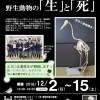 〔企画展〕野生動物の「生」と「死」の開催【標茶町博物館】