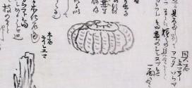 松浦武四郎が見たアンモナイトの種類は何?【コラムリレー第20回】