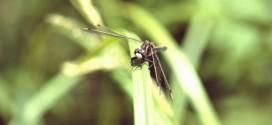 北海道東部の昆虫はどこまで分かったか?【コラムリレー第25回】