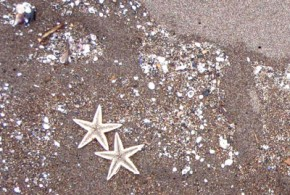 体験講座「海辺の標本箱をつくる」