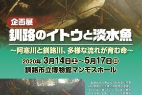 〈7/5まで会期延長〉企画展「釧路のイトウと淡水魚」【釧路市立博物館】