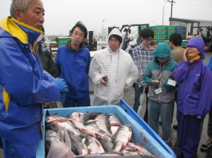 2011年、ゼニガタに食害されたサケについて、スタディーツアーの参加者に説明する漁業者。