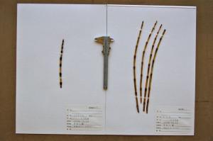本別町歴史民俗資料館の植物標本