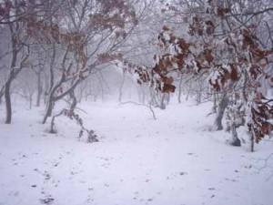 石狩海岸林、冬。
