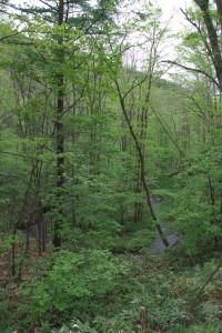 自然豊かな森の中を流れる川
