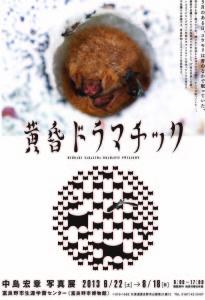 黄昏ドラマチックポスターのコピー