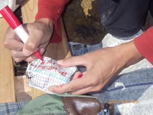 写真7 採集標本の整理。