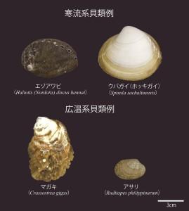 図1 寒流・広温系貝類例