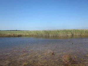 弁天沼の北西側から(2014年9月14日撮影)