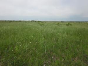 ウトナイの南岸。白く見えるのはサギスゲ(2013年7月1日)