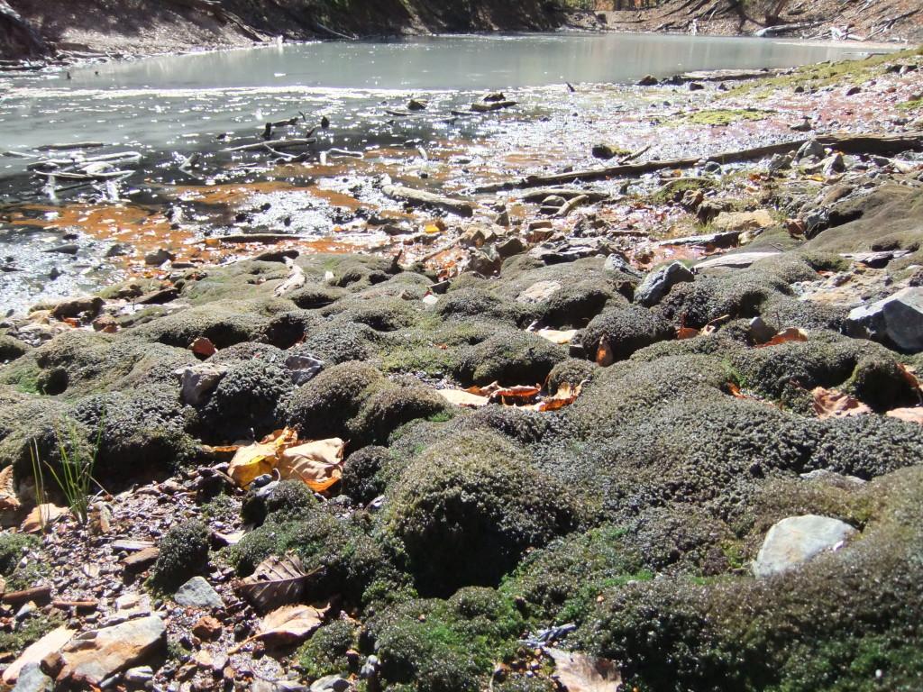 噴泉塔の周辺に生育するチャツボミゴケ群落