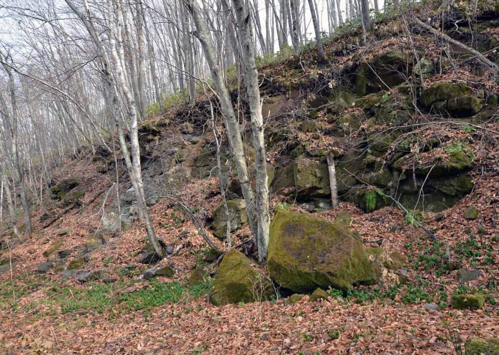 写真2 林道脇の溶結凝灰岩