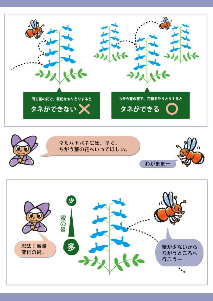 蜜量の分布と、マルハナバチの行動の関係