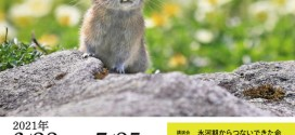 ナキウサギ写真展と講演会【浦幌町立博物館】